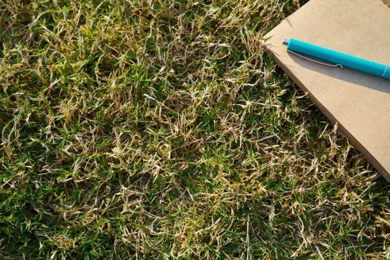 Les bienfaits de l'écriture en plein air par Céline Weissier, animatrice d'ateliers d'écriture